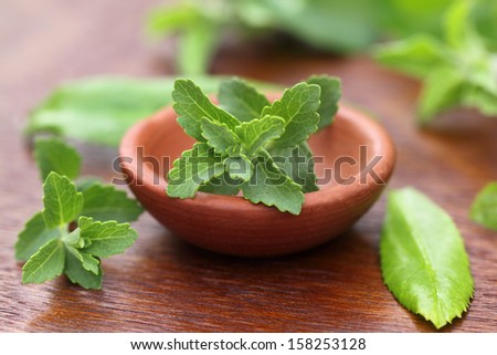 Stevia with other medicinal herbs - stock photo