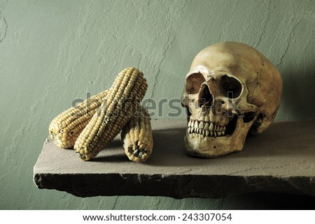 Still life art photography expired concept with human skull and expired corn - stock photo