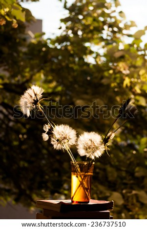 Still life composition with dandelions and old books on natural background, at the window, in a sunny day  - stock photo