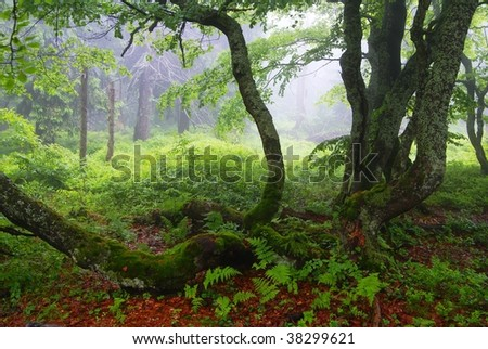 still-life from rychorsky prales - forest in national park Krkonose mountains Czech republic