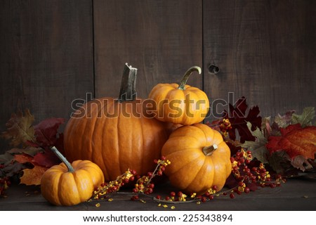 Still life harvest with pumpkins and gourds for Thanksgiving - stock photo