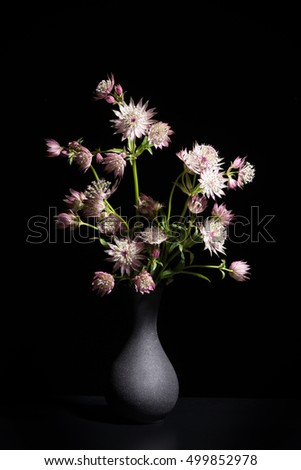 Still life in black with a bouquet of great masterwort flowers