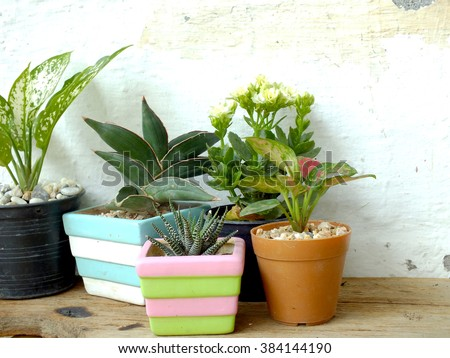 still life natural house plants on wooden background texture with space copy