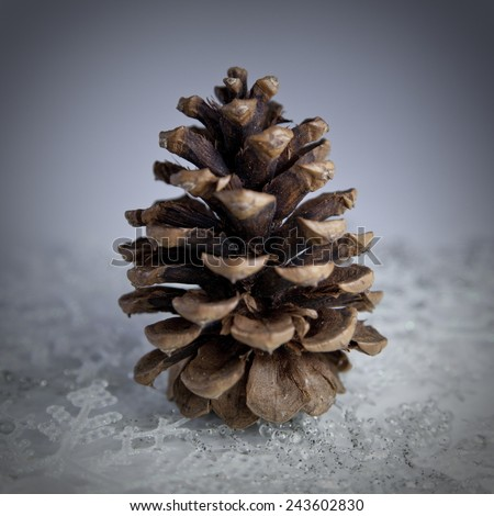 Still life of a pine cone with snowflakes - stock photo