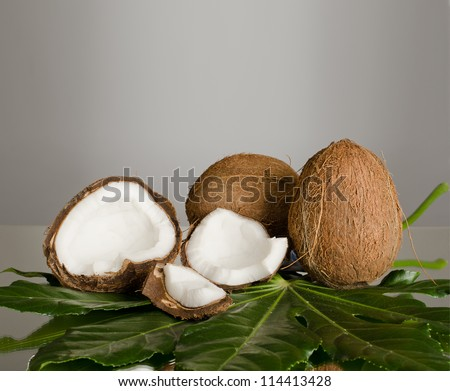 still-life of  coconut with  olive-branch on grey background - stock photo