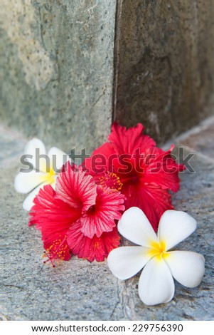Still Life of Tropical Hibiscus and Plumeria Flowers Against Stone Background - stock photo