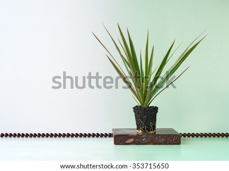 Yucca Plant Stock Images, Royalty-Free Images & Vectors | Shutterstock