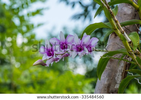 still life orchid - stock photo