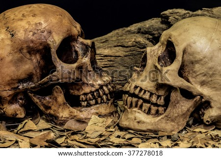 still life painting photography with couple human skull on dried leaves art abstract background, love concept, grunge, vintage and dark tone for horror halloween - stock photo