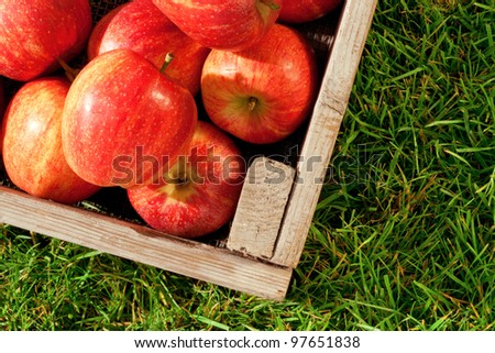 Still life photo of freshly picked red apples in a wooden crate on grass. - stock photo