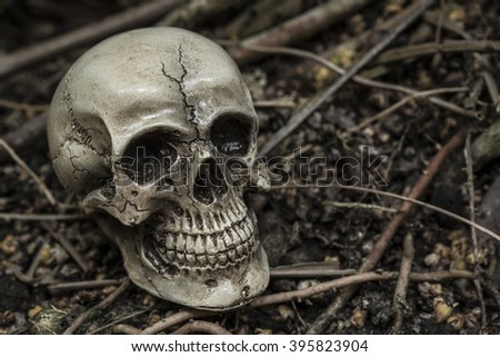 still life photography with human skull in forest darkness concept; horror halloween - stock photo