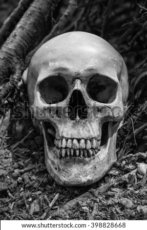 Still life skull in nature,Black and white tone