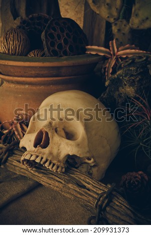 Still life with a human skull  desert plants, cactus, timber and chain.