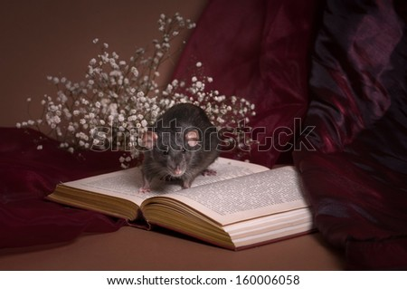 Still-life with a rat - stock photo
