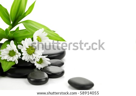 Still life with bamboo leaf, daisy and pebbles - stock photo