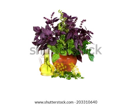 Still life with basil, celery, dill, marjoram, parsley, lettuce isolated on a white background - stock photo