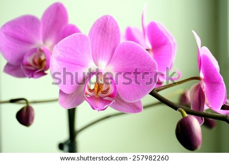 Still life with beautiful branch red orchid. - stock photo