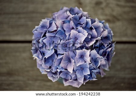 Still Life with blue  pastel colored Hortensia Flowers in Tin Can - stock photo