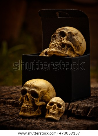 Still life with box of human skull on nature background