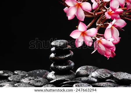 Still life with branch of frangipani with stacked black wet stones - stock photo