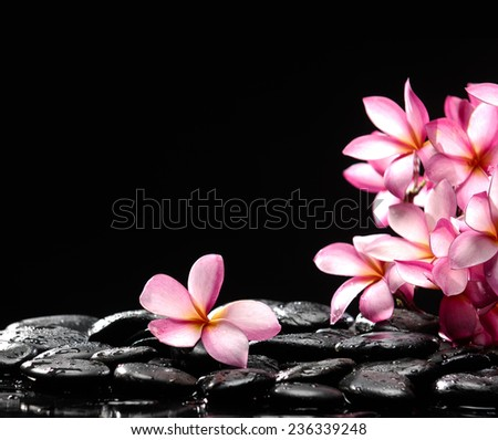 Still life with branch of frangipani with zen stones
