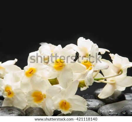 Still life with branch white orchid on pebbles - stock photo