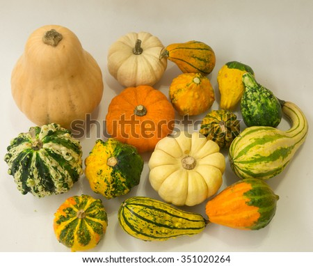 Still life with colorful decorative mini pumpkins