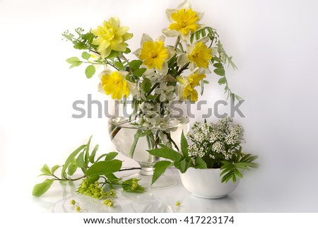 Still life with daffodils in a glass vase in water . - stock photo