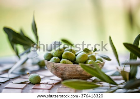 Still Life with Fresh green Olives harvested from Tree on Italian Farm