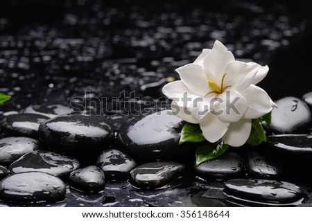 Still life with gardenia flower on pebbles  - stock photo
