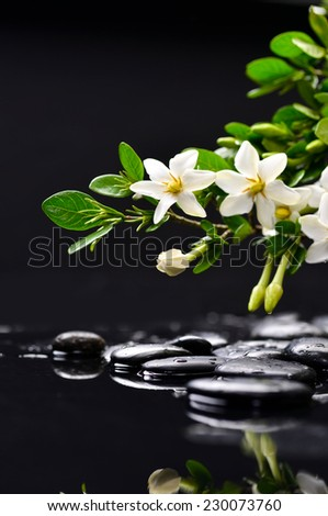 still life with gardenia on wet black pebbles  - stock photo