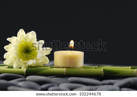 Still life with gerbera with candle and thin bamboo grove on pebbles