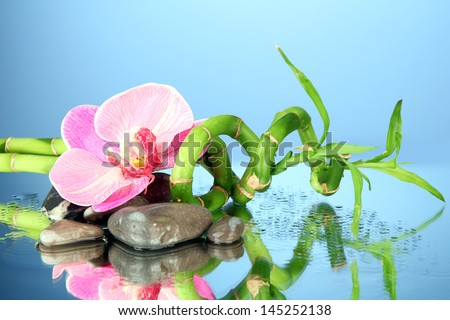 Still life with green bamboo plant, orchid and stones, on blue background - stock photo