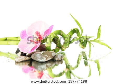 Still life with green bamboo plant, orchid and stones, on white background - stock photo