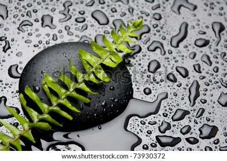 Still life with green fern on stone in water drops - stock photo