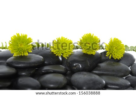 Still life with green fern with green flower on pebbles - stock photo