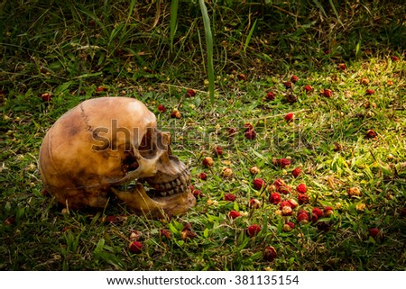 Still life with Human a skull on grass