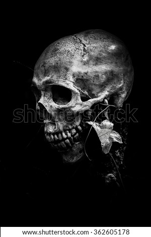 Still life with human skull and flower on black background - stock photo