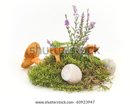 Still life with mushroom, moss and shell of snail on white background - stock photo