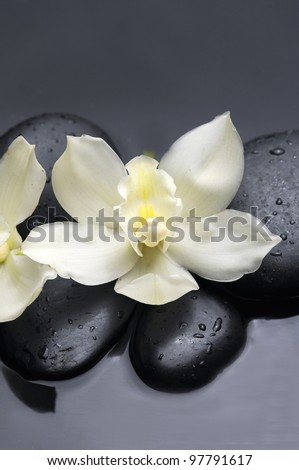 still life with orchid and zen stone reflection