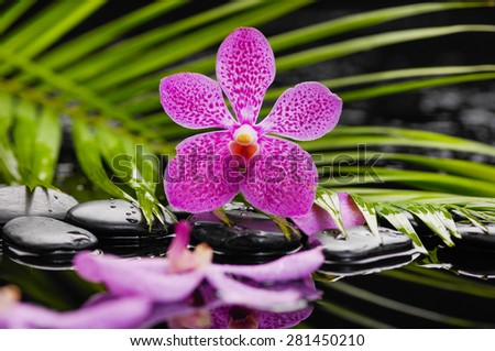 Still life with orchid, green leaf and zen stones - stock photo
