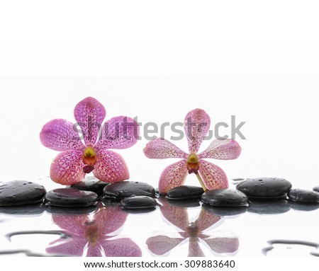 Still life with orchid with pebbles stones  - stock photo