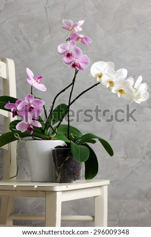 still life with orchids - stock photo