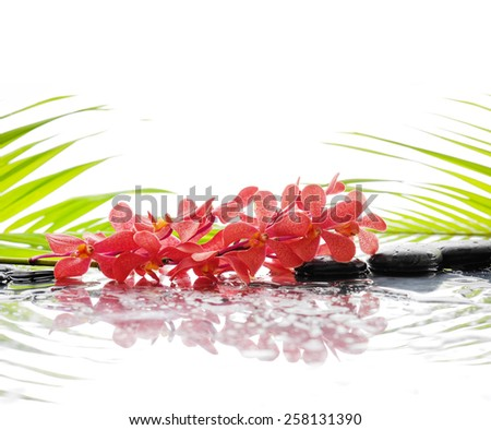 Still life with palm and wet stones with lying down orchid  - stock photo