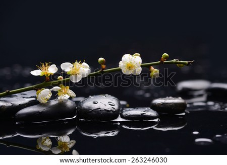 still life with pebbles and with cherry blossom - stock photo