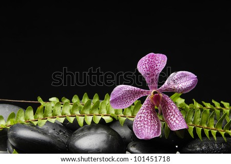 Still life with Pink orchid and stones with green fern - stock photo