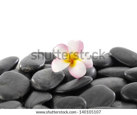 Still life with Plumeria flowers on black stones background