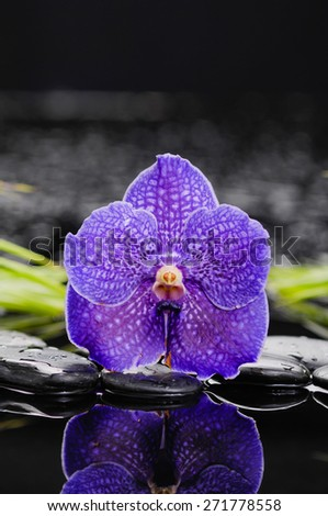Still life with purple orchid, green leaf and zen stones - stock photo