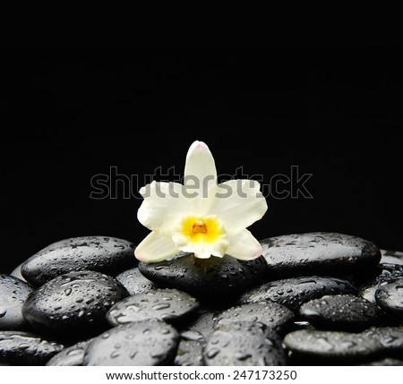 Still life with Single white orchid on wet pebbles background - stock photo