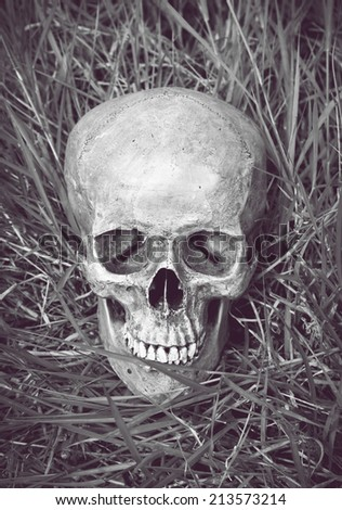 still life with skull human in meadow in monochrome filter effect.
